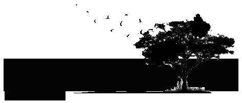 Environmentalis Bureau D Etudes Environnement Et Social